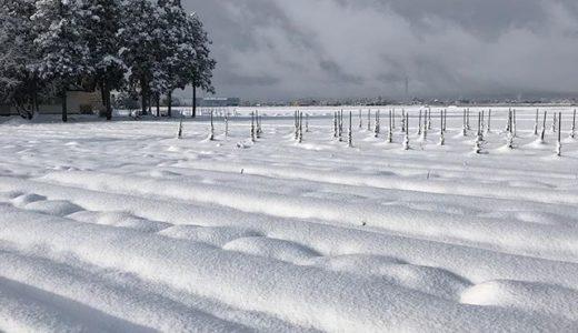 ダリアの球根、この雪の下(泣)  まさか根雪にはならないよね?