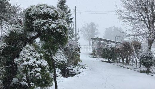 とうとう雪が降ってきました!