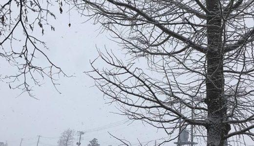 久しぶりに吹雪 今日も秋田弁でしゃべってます!