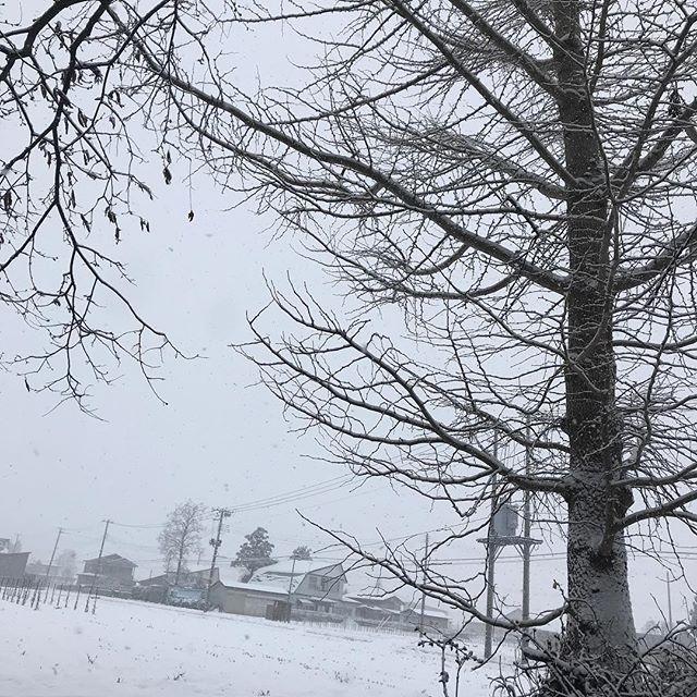 今日は一日ふりつづくらしい(≧∀≦) 今年は11月に降った雪が根雪になりました!#雪 #森川農園  #大仙市 #秋田県