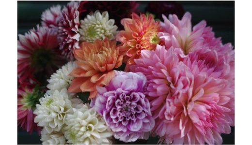 東京の平澤剛生花店様にダリアを置いてもらっています